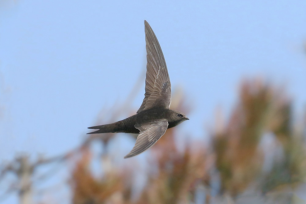 Swift by Mick Dryden