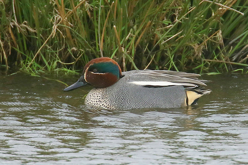 Teal by Mick Dryden