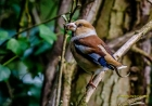 Hawfinch by Mike Nuttall