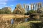 Grouville Marsh By Mick Dryden