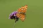Comma by Mick Dryden